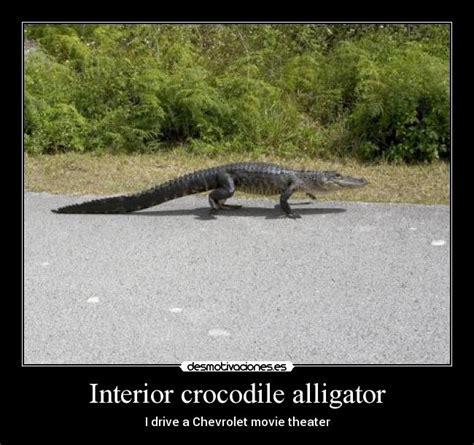 interior crocodile alligator desmotivaciones