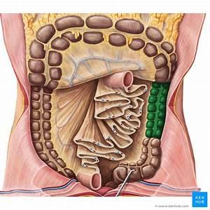Anatomy Of Lower Left Abdomen