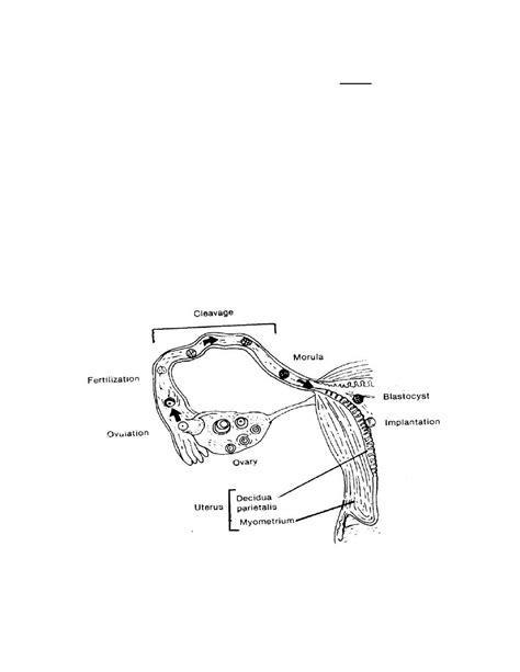 Figure 2-4. Events of fertilization and implantation