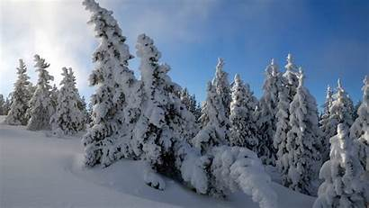 Snow 1080p Trees Hdtv 1080 1920 Wallpapers