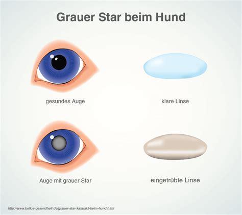 Grauer Star (Katarakt) beim Hund  Symptome & Behandlung