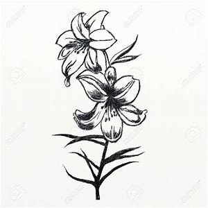 Pencil Flower Sketches - Pencil Art Drawing