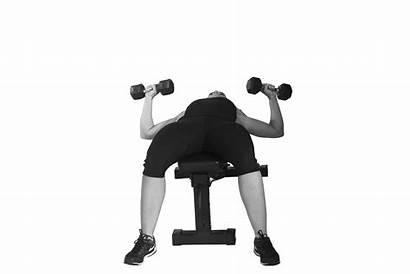 Dumbbell Bench Exercises Flat Upper Dumbbells Press