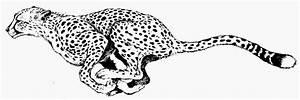 Cheetah print black and white clipart kid - Clipartix