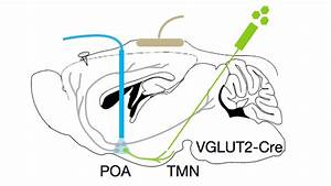 A Wiring Diagram For Sleep