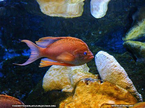 aquarium poisson de fond fond d 233 cran de loire atlantique le croisic aquarium du croisic poisson en fond 233 cran par