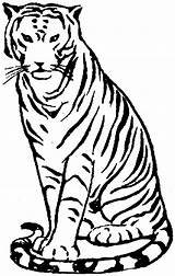 Tiger Coloring Pages Clipart Animals Zoo Bengal Sitting Drawing Clip Simple Wildlife Cliparts Library Clipartmag Without Comments sketch template