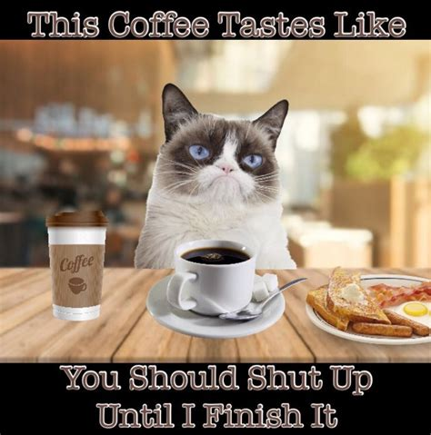 Reddit gives you the best of the internet in one place. Grumpy Cat Coffee Memes   Coffee humor, Grumpy cat humor, Coffee meme funny