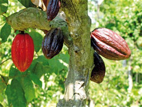 cours de cuisine en groupe le cacao en equateur satoriz le bio pour tous