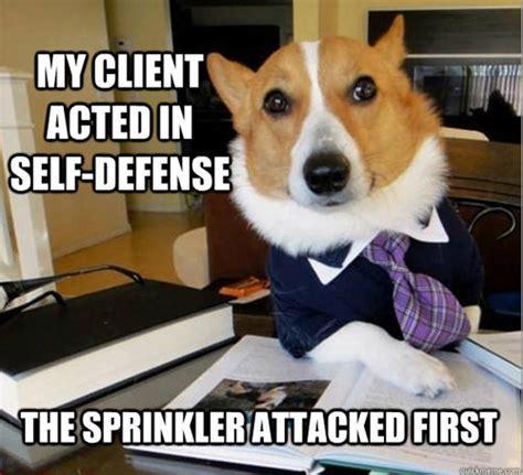 Dog Sprinkler Meme - best of the lawyer dog meme smosh