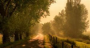 Dirt, Road, Trees, Sunlight, Wallpapers, Hd, Desktop, And, Mobile, Backgrounds