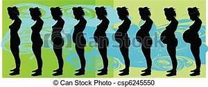 Schwangerschaft 10 Monate : vektor clipart von schwangerschaft stadien stages von ~ Articles-book.com Haus und Dekorationen
