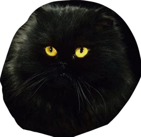 black cat bean bag chair created by from print all me