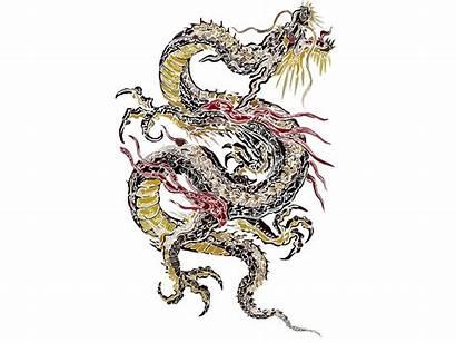 Dragon Tattoo Designs Japanese Clipart Colors Skull