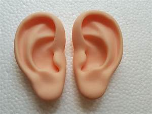 Ear Model Silicone Ear Acupuncture Practice Model Right