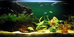 Aquarium Gestaltung Bilder :  ~ Lizthompson.info Haus und Dekorationen