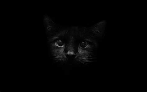Black Cats Hd Wallpapers Beautiful Pictures & Images