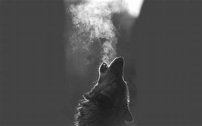 Wolf Howling Wallpapers Animal Monochrome Animals Moon