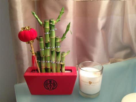 entretien lucky bambou d interieur cobtsa