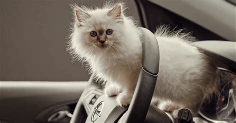 opel stuffs  adorable kittens   car corsa ad