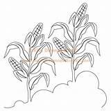 Crops Drawing Corn Crop Sweet Getdrawings sketch template