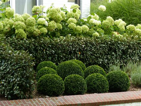 planter des hortensias en pot le jardin fa 231 ade balcon terrasse entr 233 e el lef 233 bien