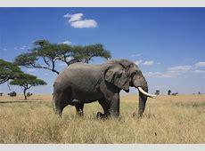 Best of East Africa Safari Africa Easy