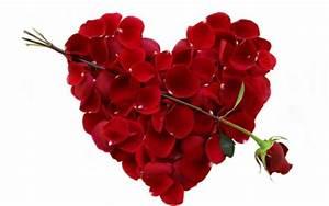 1 Rote Rose Bedeutung : valentinstag bedeutung love is inthe air ~ Whattoseeinmadrid.com Haus und Dekorationen