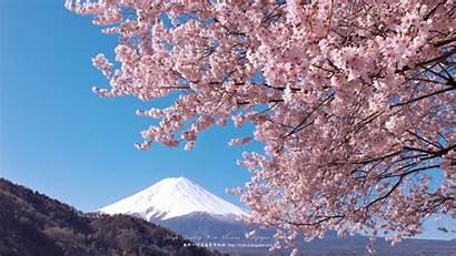 Sakura Wallpapers 富士山 1920 Kabegami Wallpaperup Fuji