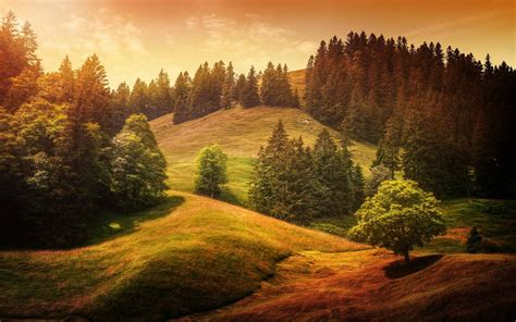 forest, Landscape, Trees Wallpapers HD / Desktop and ...