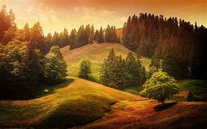Forest, Landscape, Trees, Wallpapers, Hd, Desktop, And