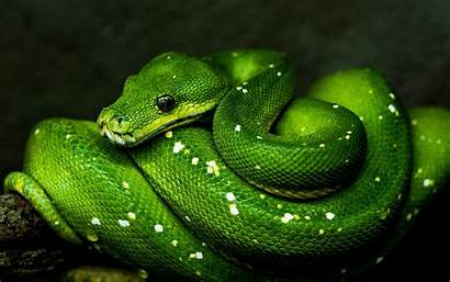 Snake Reptile Wildlife 4k Background Ultra