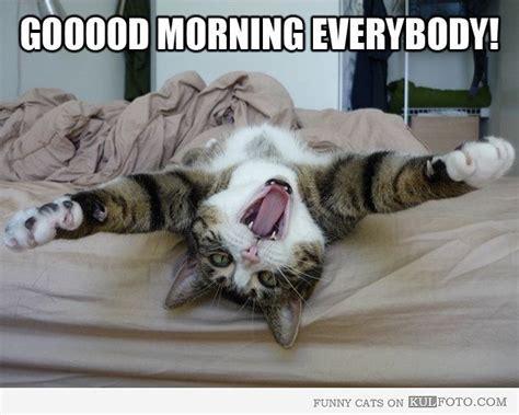 Morning Cat Meme Animal Morning Meme Www Imgkid The