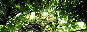 Plante Grimpante Pergola : les meilleures plantes pour pergola ~ Nature-et-papiers.com Idées de Décoration