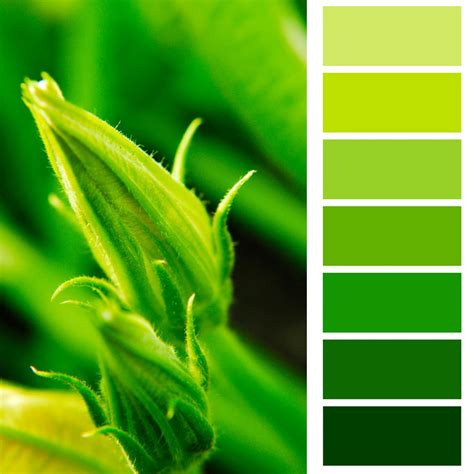 green colors what do monochromatic colors in we explain in detail