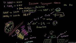 Khan Academy Free Body Diagram