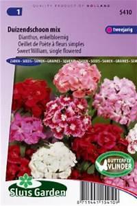 Oeillet De Poete : oeillet de po te fleurs simples mix graines de fleurs ~ Melissatoandfro.com Idées de Décoration