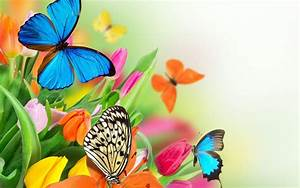 colorful butterfly on flower wallpaper - Download Hd ...