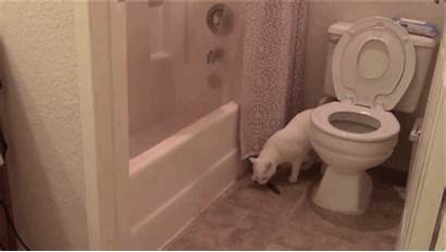 Toilet Cat Failed Adorably Attempted Move