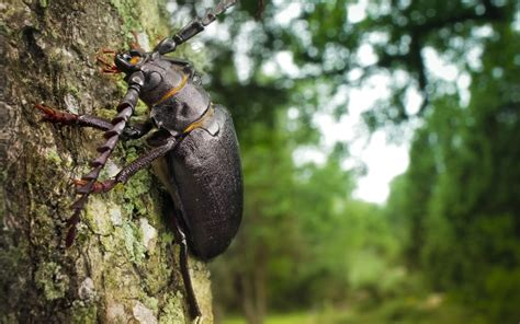 Forest Insects Beetles Bugs Macro 1680x1050 Wallpaper