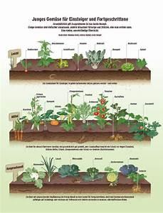 Wann Welches Gemüse Pflanzen Tabelle : garten gem se richtig anbauen beobachter alte sorten neue wege pinterest garten ~ Frokenaadalensverden.com Haus und Dekorationen