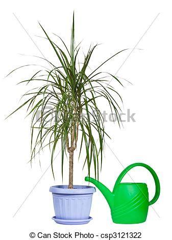 Große Pflanzen Für Innen by Stock Foto Innen Pflanze In A Plastik Dekorativ