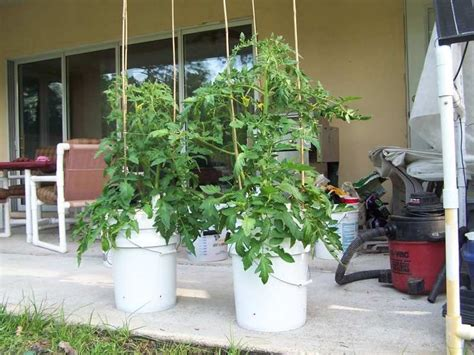 Best Images About Non-circulating Hydroponics On