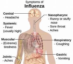 File Symptoms Of Influenza Svg