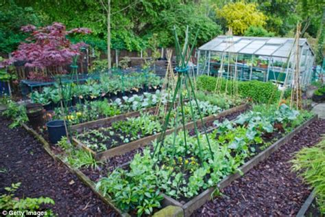 enough to eat grow vegetables that will add colour