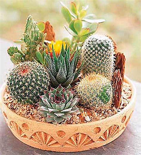 Rare Mixed Cactus Seeds, Succulents Seeds, 100pcs/pack ...