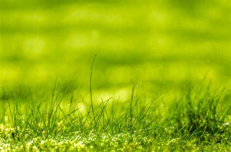 green grass  stock photo public domain pictures