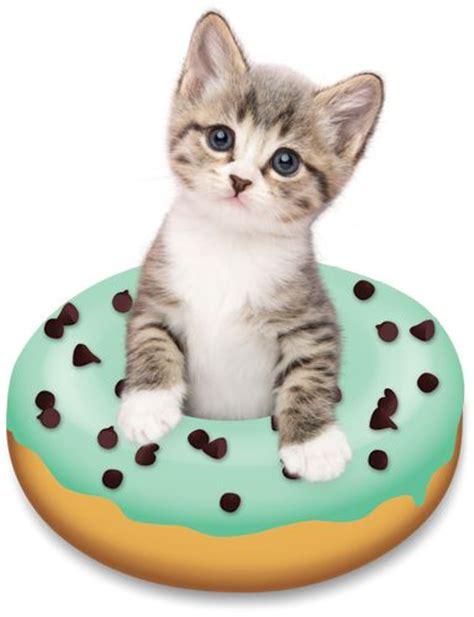 doughnut kitten  tania hennessy aaaah pinterest