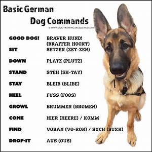 21 german dog commands to train your dog With how to properly train a dog