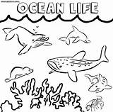Ocean Coloring Pages Sheet Colorings sketch template